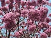 4楓之琳園藝小苗種子圖檔很多稀有植物:_0aVrVHojiNxzBNDmMNHaw.jpg
