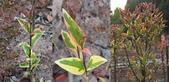 3楓之琳園藝小苗種子圖檔很多稀有植物:miihmE0Bad4MwoyTR0XZIw.jpg