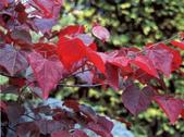 3楓之琳園藝小苗種子圖檔很多稀有植物:OLpW6c_mhaqJy11T0dpVtA.jpg