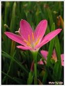 6楓之琳園藝小苗種子圖檔很多稀有植物:T2EuXLXm8cXXXXXXXX_!!52626540.jpg