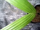 6楓之琳園藝小苗種子圖檔很多稀有植物:IMG_20131004_114450.jpg