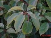 6楓之琳園藝小苗種子圖檔很多稀有植物:20110630150256641.jpg