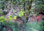 6楓之琳園藝小苗種子圖檔很多稀有植物:709212313461119.jpg