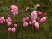 4楓之琳園藝小苗種子圖檔很多稀有植物:_XsJOKeiGmLLsBEEt2lPlw.jpg