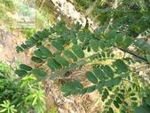 6楓之琳園藝小苗種子圖檔很多稀有植物:987704.jpg
