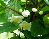 14楓之琳園藝小苗種子圖檔很多稀有植物:503d269759ee3d6d049f51c243166d224f4ade5a.jpg