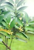 6楓之琳園藝小苗種子圖檔很多稀有植物:01300000166746121259074925367.jpg