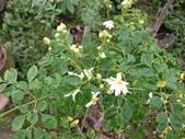 6楓之琳園藝小苗種子圖檔很多稀有植物:T2ueYBXfNaXXXXXXXX_!!276710487.jpg