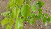 9楓之琳園藝小苗種子圖檔很多稀有植物:GF1qc_uDdl9VkYzWUvXpZw.jpg