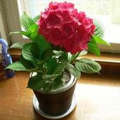 10楓之琳園藝小苗種子圖檔很多稀有植物:T2SK6pXe4aXXXXXXXX_!!1021427523.jpg_310x310.jpg