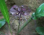 4楓之琳園藝小苗種子圖檔很多稀有植物:x5J_d8v3kX5Yi8WNUoL_bA.jpg