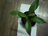 1楓之琳園藝小苗種子圖檔很多稀有植物:IMG_20130823_222317.jpg
