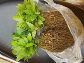 3楓之琳園藝小苗種子圖檔很多稀有植物:c7NO8z6936OWYn9xtpk4gQ.jpg