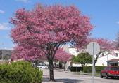 4楓之琳園藝小苗種子圖檔很多稀有植物:Cy0yGmxp3KOQgswOfwaa5w.jpg