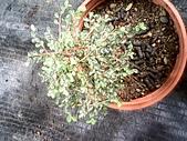 6楓之琳園藝小苗種子圖檔很多稀有植物:IMG_20131004_113628.jpg