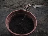 14楓之琳園藝小苗種子圖檔很多稀有植物:IMG_5375.jpg