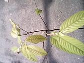 6楓之琳園藝小苗種子圖檔很多稀有植物:IMG_20131004_112317.jpg