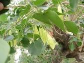 4楓之琳園藝小苗種子圖檔很多稀有植物:images (6).jpg