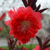 10楓之琳園藝小苗種子圖檔很多稀有植物:T1WPZjXgJbXXXXXXXX_!!0-item_pic.jpg_310x310.jpg