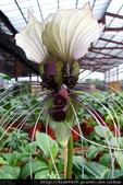 4楓之琳園藝小苗種子圖檔很多稀有植物:PkXERiOyYjxshwXrobnrpg.jpg