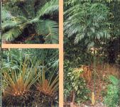 12楓之琳園藝小苗種子圖檔很多稀有植物:0dd7912397dda1440ca792b3b2b7d0a20cf48601.jpg