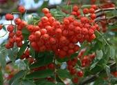 14楓之琳園藝小苗種子圖檔很多稀有植物:8c89a59109ed123dfe2c1d (1).jpg