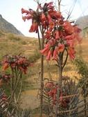 6楓之琳園藝小苗種子圖檔很多稀有植物:64b28b18a8c1c3c0bea8d_nb.jpg