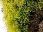 4楓之琳園藝小苗種子圖檔很多稀有植物:77VMQOtiiDUFiGBbMZCpqw.jpg
