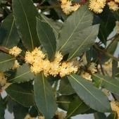 5楓之琳園藝小苗種子圖檔很多稀有植物:fFmzfqLPWd_ycu6X9V3uDQ.jpg