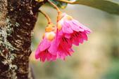 2楓之琳園藝小苗種子圖檔很多稀有植物:PEu8mu4Uln53Nsj9ZXefqA.jpg