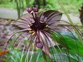 4楓之琳園藝小苗種子圖檔很多稀有植物:0ngJcfFnL_tRsQ70jKMcFg.jpg