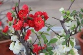 4楓之琳園藝小苗種子圖檔很多稀有植物:YMfFob8JcbYi_AeU_Sp4xg.jpg