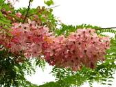 4楓之琳園藝小苗種子圖檔很多稀有植物:Y7LlraFHRElEo0lMreJsHA.jpg