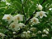 5楓之琳園藝小苗種子圖檔很多稀有植物:Aozw4mMc_wBq06HMJG16jQ.jpg