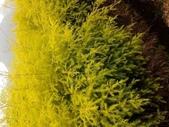 4楓之琳園藝小苗種子圖檔很多稀有植物:kLEvWKWQXajvyy9jS7KJTQ.jpg