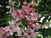 13楓之琳園藝小苗種子圖檔很多稀有植物:2011917152328.jpg