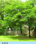 4楓之琳園藝小苗種子圖檔很多稀有植物:Jy_lC7uDGkJ89bfTwBtRdg.jpg