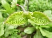 12楓之琳園藝小苗種子圖檔很多稀有植物:T2kh6aXXBaXXXXXXXX_!!793285253.jpg_310x310.jpg