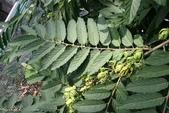 2楓之琳園藝小苗種子圖檔很多稀有植物:p95eHx6KAl5Hl04Ze5F0Lg.jpg