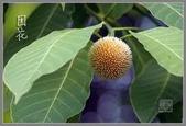 2楓之琳園藝小苗種子圖檔很多稀有植物:wXM8Ma3oQxxjgJhb2vneLw.jpg