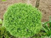 8楓之琳園藝小苗種子圖檔很多稀有植物:2007411153235.jpg