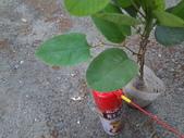 4楓之琳園藝小苗種子圖檔很多稀有植物:Tz5_U9exYdUISYYmm1JOFA.jpg
