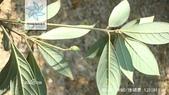 6楓之琳園藝小苗種子圖檔很多稀有植物:b7fd5266d01609243673ac2cd50735fae7cd7b899e51148e.jpg