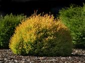 5楓之琳園藝小苗種子圖檔很多稀有植物:y5fiW89KxsJXKIZjVc4w3A.jpg