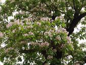 11楓之琳園藝小苗種子圖檔很多稀有植物:T1vheJXgFuXXXNcG3._111326.jpg_310x310.jpg