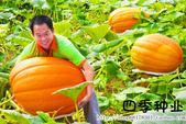 6楓之琳園藝小苗種子圖檔很多稀有植物:T2nCNNXX4dXXXXXXXX_!!737209148.jpg