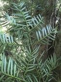 10楓之琳園藝小苗種子圖檔很多稀有植物:T1cSFwXtXgXXXXXXXX_!!0-item_pic.jpg_310x310.jpg