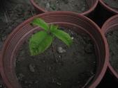 14楓之琳園藝小苗種子圖檔很多稀有植物:IMG_5379.jpg