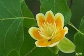 5楓之琳園藝小苗種子圖檔很多稀有植物:W7SS_MleCfEOQuyixcTV8g.jpg