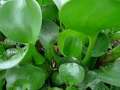 他馬的       就是愛「春的綠」:春的綠